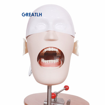 Dental Head Model Training Simulator Practise teeth model Dental Manikins Phantom Model for Dental Teaching Model
