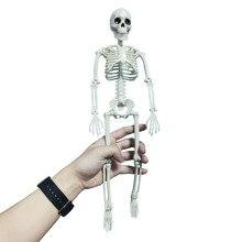 Esqueleto humano activo modelo esqueleto de anatomía esqueleto de modelo médico aprendiendo decoración de fiesta de Halloween boceto de arte esqueleto