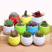 Mini Colourful Round Plastic Plant Flower Pot Garden Home Office Decor Planter Desktop Flower Pots Home Office Decoration