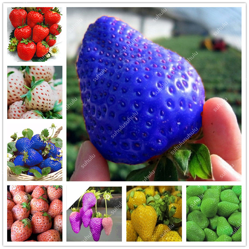 1000 Pcs Rare Strawberry Plants, Giant Strawberry Organic Fruit Flores Vegetables Non-GMO Bonsai Pot For Home Garden Planta