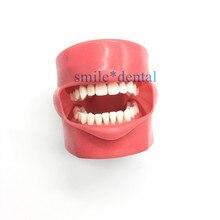 قناع الفم للأسنان نموذج دراسة التدريس حامل القناع ديكور نموذج ممارسة الأسنان نموذج تعليم الأسنان