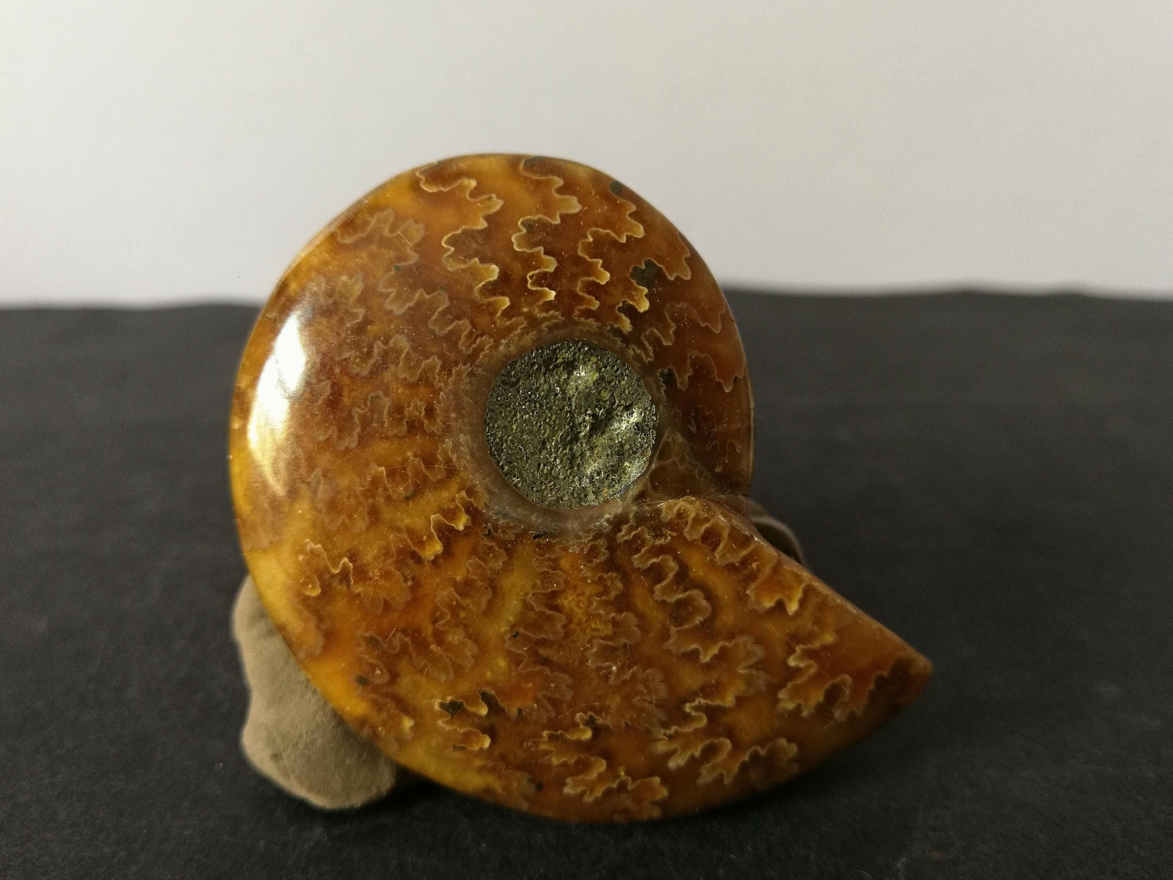 46.1 Gnatural Ammonite, Kristal Kuarsa Spesimen Energi Penyembuhan