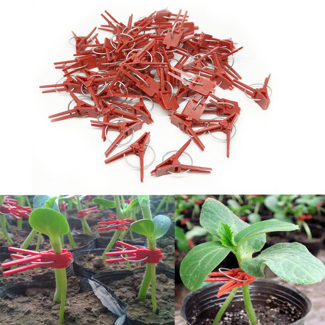Lote de 50 pinzas de plástico para injertos, hebilla para atar plantas de jardín, para fresa, sandía, tomate, hortalizas, abrazaderas fijas, herramienta de jardín