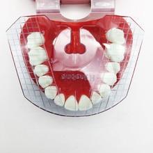 1 szt. Laboratorium dentystyczne dental płyta prowadząca układ zębów na protezie
