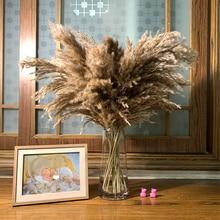 20 stems Raw Color Dried Pampas Grass Bouquet Wedding Flower Bunch Natural Plants Home Decor