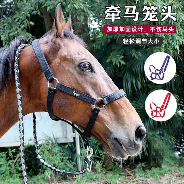 Black Paisley Red Haute Horse BHPB1400 MH Equine Elite Horse Halter