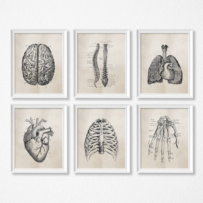 Human Organs Anatomy Lung Brain Heart Living Room Decorative Painting Hospital Clinic School Hanging Painting Wall Canvas Art