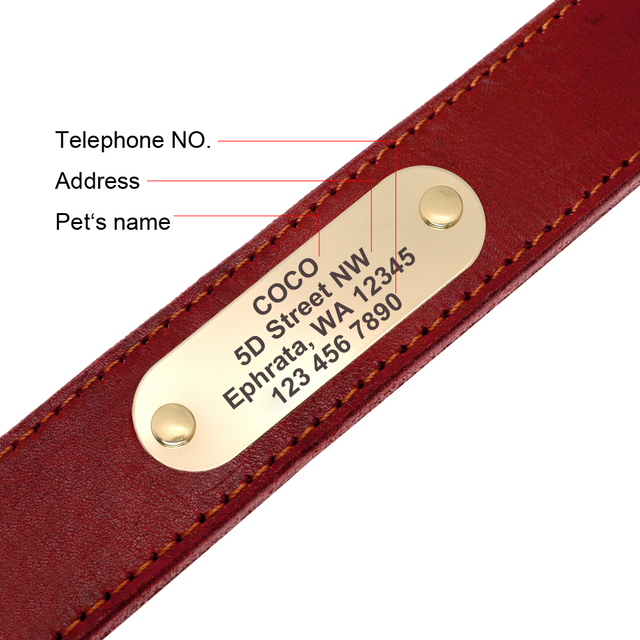 Personalized Dog Collar And Leash  4