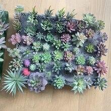 Fausses fleurs succulentes artificielles 12 pièces, Mini plantes florales en PVC, décoration artisanale pour la maison et le bureau