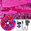 LED Wachsen Licht Gesamte Spektrum DC 12V Licht Streifen SMD 2835 LED Phyto Lampen Für Pflanzen Gewächshaus Hydrokultur Growining 5M-30M Band