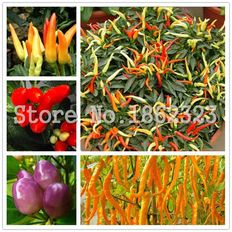 200 Buah Cabai Merah Jalapeno Cabai Cabai Bonsai, Sayur Organik Tanaman halaman & Balkon Outdoor Tanaman untuk Taman Rumah