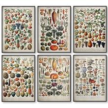 Cartel de hongo de frutas y verduras Vintage, Impresión de lienzo, arte de pared antiguo, impresión botánica, imagen, póster de ciencia, Decoración de cocina