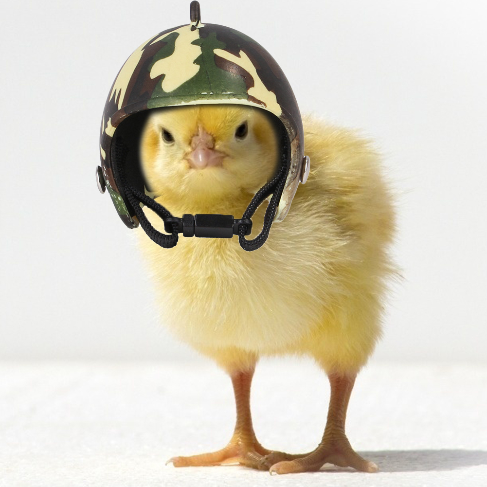 Chicken Helmet Small Pet Hard Hat Bird Duck Quail Hat Headgear Pet Chicken Helmet Bird Head Helmet Pet Supplies