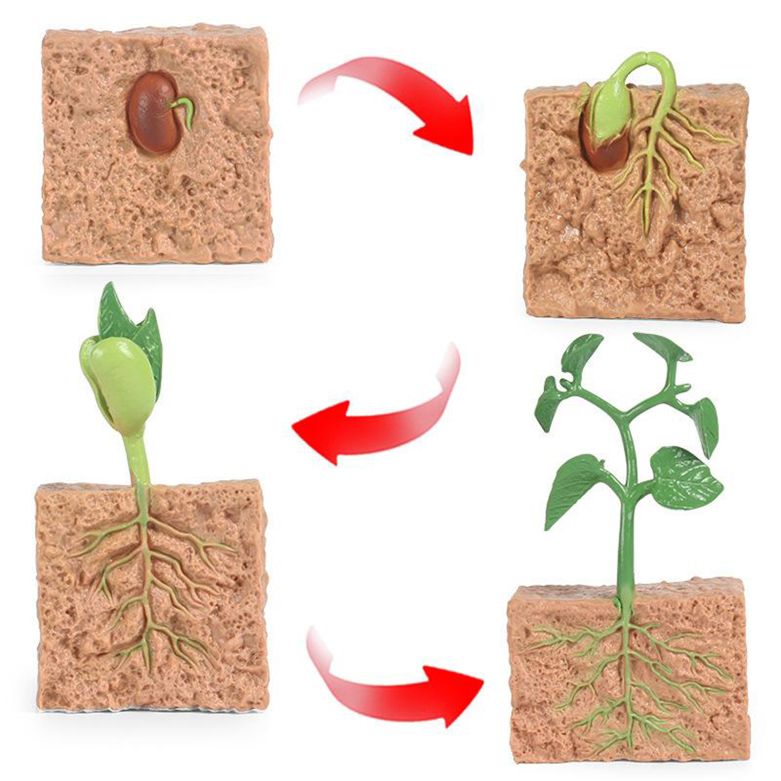 Kids Plant Seeds Growth Life Cycle Playset Cognitive Toys Teaching Aids 3