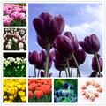 Парфюмерные тюльпаны 2 шт., семена, бонсай, Садовый цветок, натуральные растения, домашний ароматный красочный голландский тюльпан, эссенция...