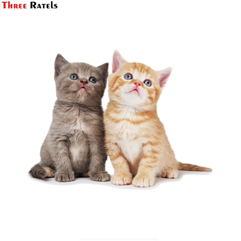 Three Ratels FTC-765# 17X13CM Cute Lovely British  Cat Kitten  Window Wall Auto Motorcycle Car Sticker Decal