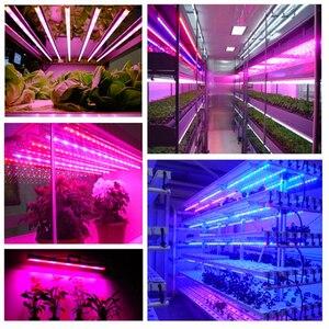 Image 5 - DC 12V LED לגדול אורות קלטת 5050 1m 2m 3m 5m ספקטרום מלא צמח צמיחה אור הידרופוניקה מקורה שתילי פרח פיטו מנורה