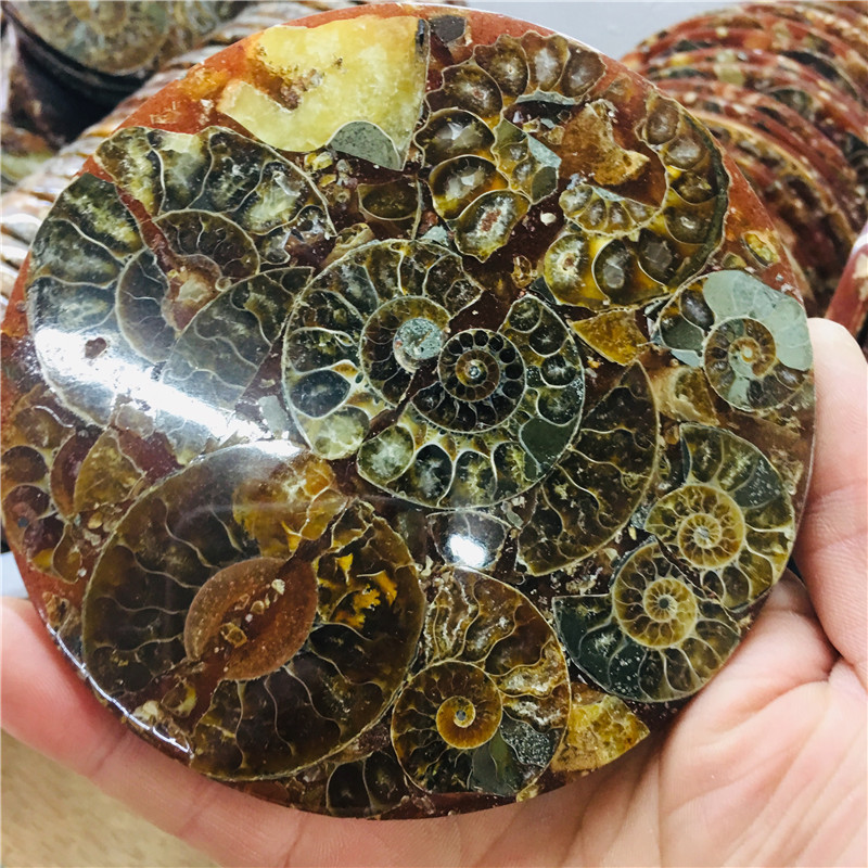 12cm Natural AMMONITE PRETTY NAUTILUS MADAGASCAR FOSSIL SPECIMEN HEALING Free Shipping 1pc