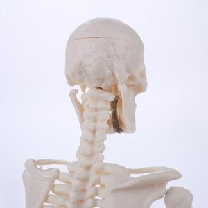 Image 4 - 45 センチメートル人間の解剖学的解剖骨格モデル卸売小売ポスター学ぶ援助解剖人間の骨格モデル
