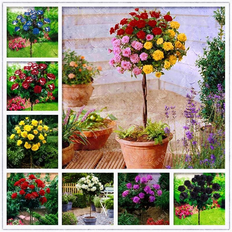 Plant Flower Bath Salts Rose Tree Essence 100Pcs XZZ-76