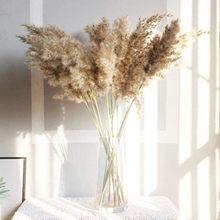 30/50 pces bunch 50cm natural phragmites reed flores bulrush buquê grande secas pampas grama decoração de casa casamento #4