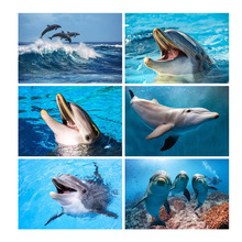 5D Diy Diamond Painting Full Drill Square Animal Dolphin Embroidery Sale Pictures With Rhinestones