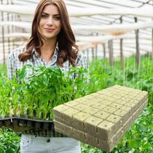 50Pcs Rockwool Grow Cube Hydroponics Germination Good Air Permeability Fiber Plant Propagation Cube For Home Flower Seeds