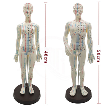цена на Female / Male Acupuncture Model 50cm with Chinese Points & Base PVC Human Body Acupuncture Model Acupuncture Point Model