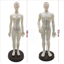 Femmina/Maschio di Punti di Agopuntura Modello di 50cm con il Cinese e di Base IN PVC di Agopuntura Del Corpo Umano Modello di Punto di Agopuntura Modello