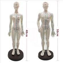 Modelo de acupuntura para mujer y hombre, 50cm con puntos y Base china, modelo de acupuntura de cuerpo humano en PVC, modelo de puntos de acupuntura