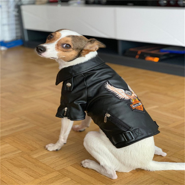 Eagle Pattern Leather Look Dog Coat 2
