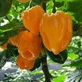 150 шт. испанский семена паприки семена бонсай сад природа желтый перца для дома банан перец цветок сущность маска для губ Ky-5