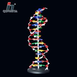 60 см Структура ДНК основа для моделирования пара генно-ген ДНК двойная спираль ДНК модели Пособия по биологии Обучающие, развивающие постав...