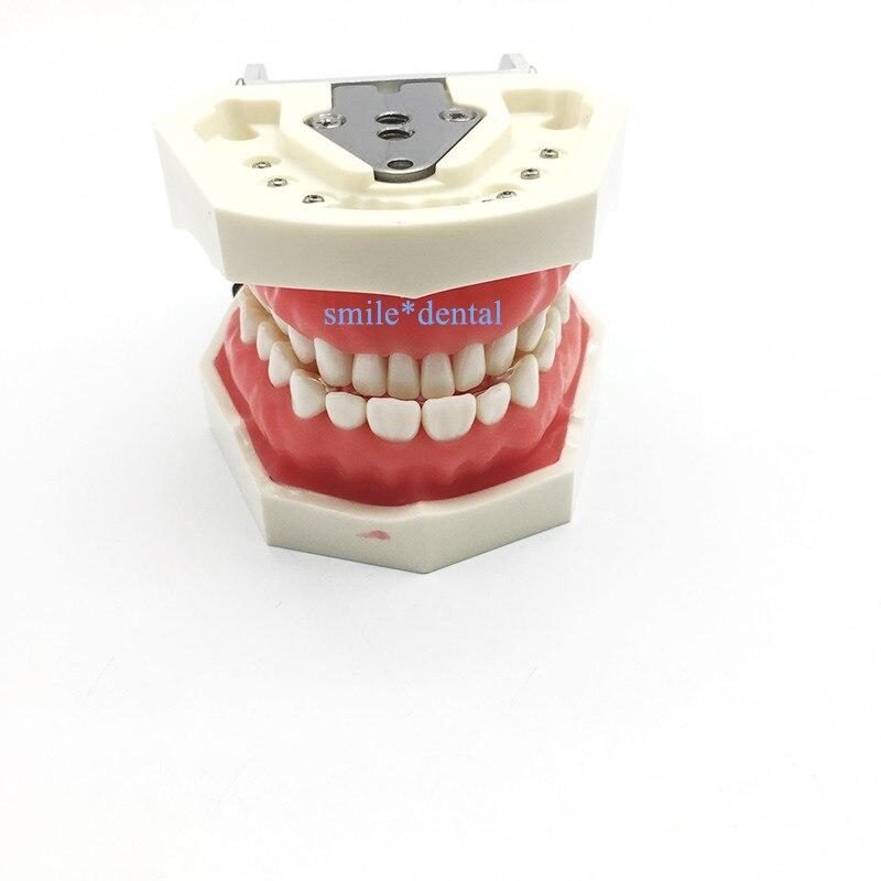 Dental Nissin Manikin Phantom Head Model Dentist Practice Model Dental Simulator Simple Head Model