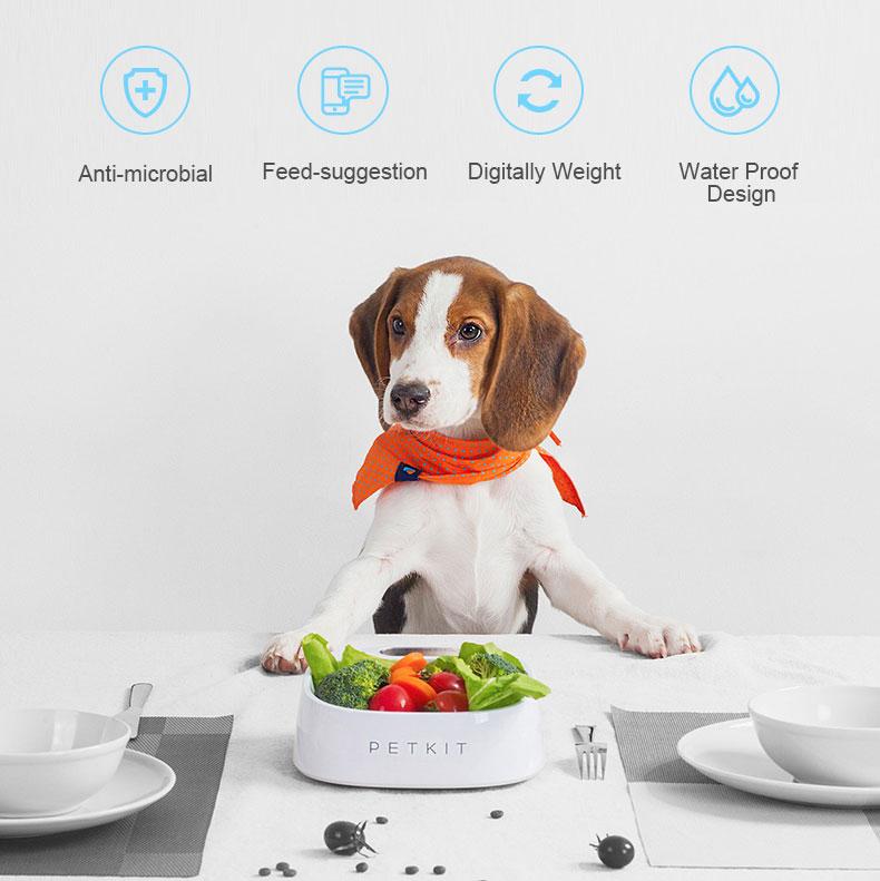 New Smart Dog Bowl For Safe Feeding | DogsMall-International