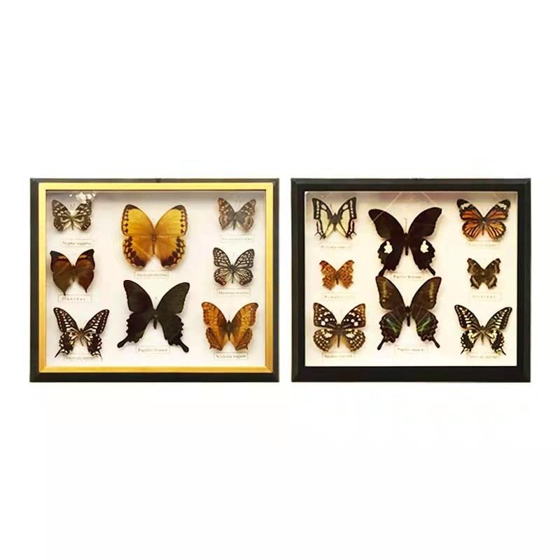 1 set of 8pcs Real Specimen butterfly specimen photo frame craft gift home decoration decoration home decoration