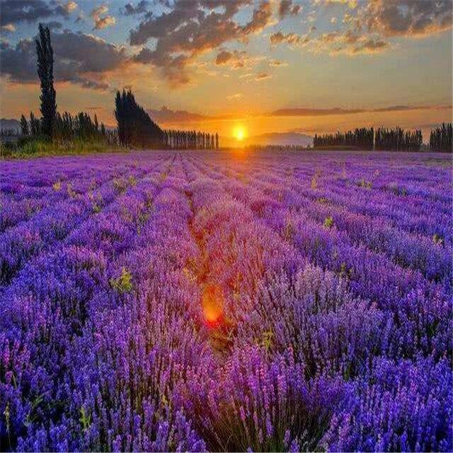 Plant Bath Salts 300Pcs Italian Lavender Flower Essence AN-ZZ32-300 1