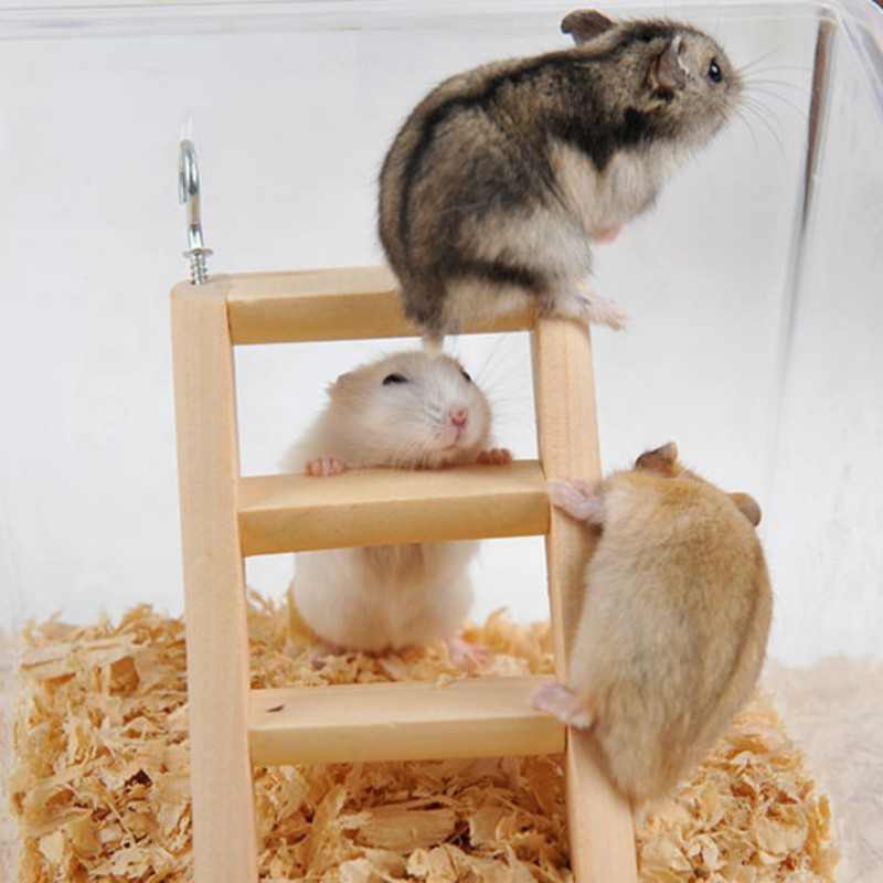 Natural Wood Small Animal Toys Hamster Chew Toys Wooden Hanging Climbing Ladder For Small Pet Mouse Rat Mice Exercise Supplies