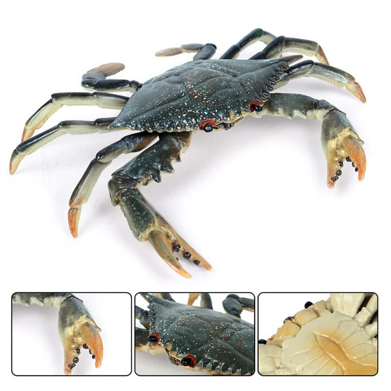 Incredible Shuttle Crab Realistic Marine Organism Model Cartoon Bathroom Water Toy For Kids