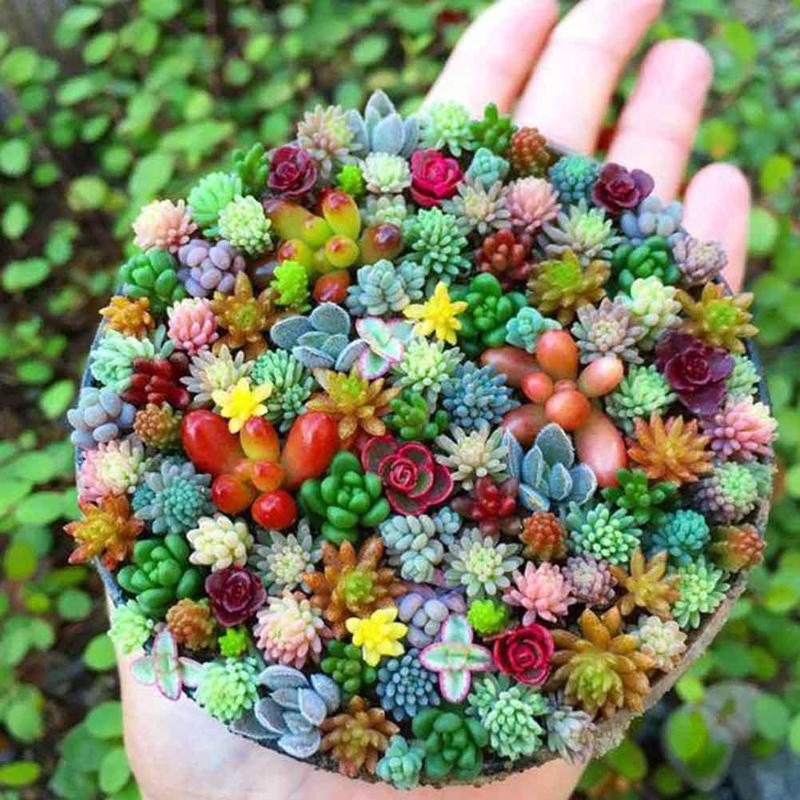 300pcs Mix Mini Succulent Lotus plants Planting Wedding Home Garden Office Bedroom Living Room Decoration Artificial Plants