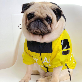 Stylish Raincoat for Dogs