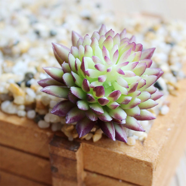 Fashion Potted Artificial Succulents Plastic Plant Fake Cactus Floral Garden Home Decor 5