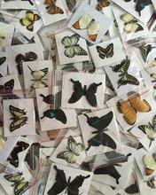 10 pçs natural real natural não montado borboleta espécime material de arte colorido misto le papillon decoração para casa diy