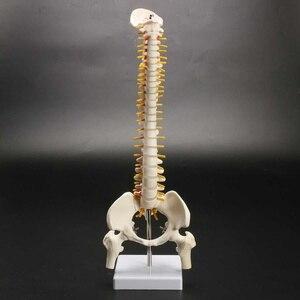 11 взрослые поясничные изгибы позвоночника модели человеческого позвоночника медицинские модели с головками таза бедра научная обучающая ...