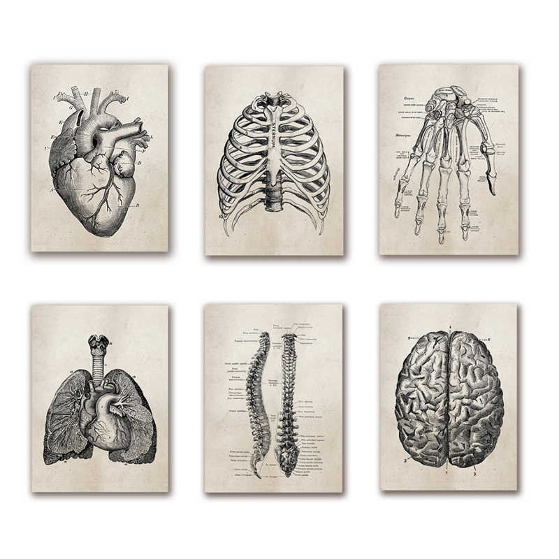 Medical Doctor Clinic Wall Pictures Decor Human Anatomy Science Vintage Posters Art Prints Medical Anatomy Canvas Painting Deco