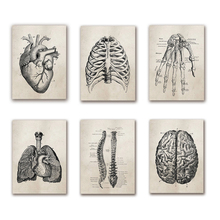 Medical Doctor Clinic Wall Pictures Decor Human Anatomy Science Vintage Posters Art Prints Canvas Painting Deco