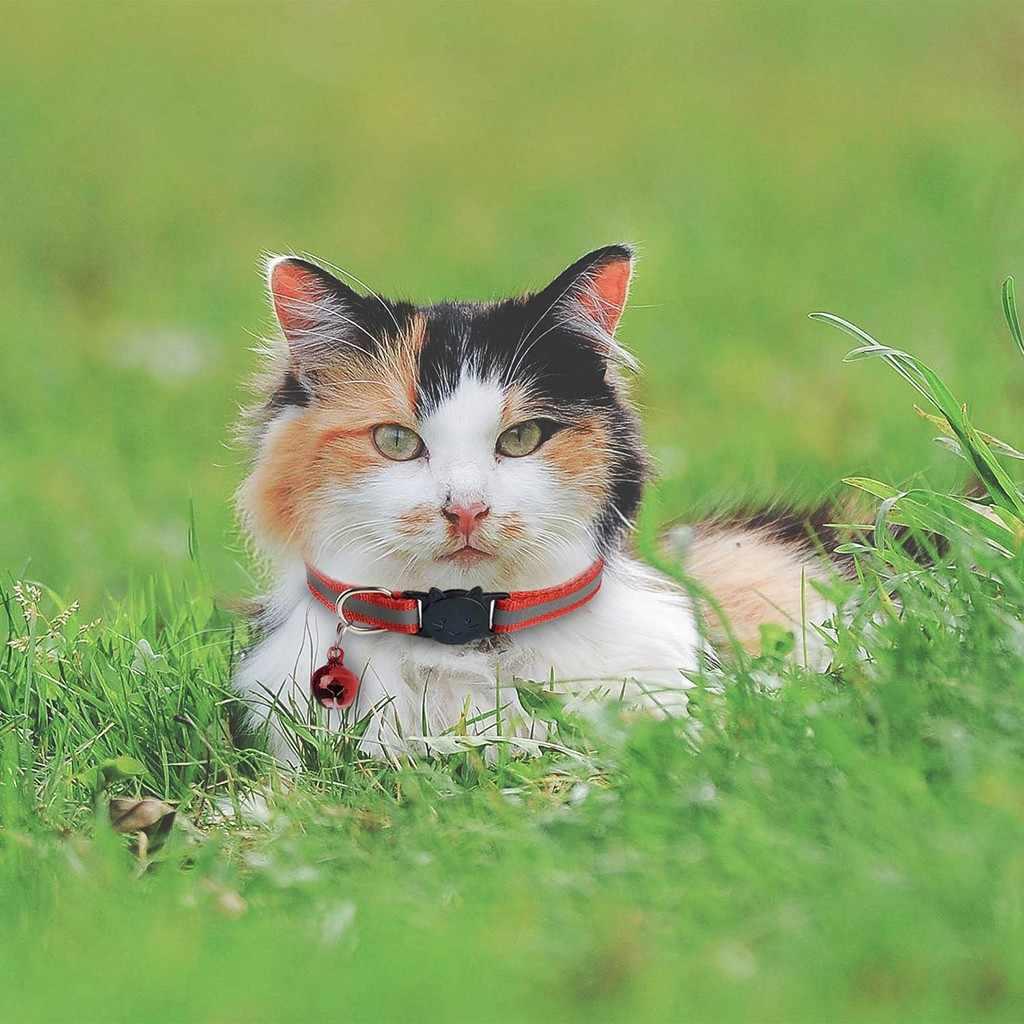 Хит! ошейник для домашних животных с колокольчиками, милые маленькие следы, регулируемое ожерелье, нейлон, полиэстер, товары для щенков, кошек, ошейник, 2020, 64P