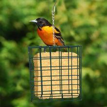 Bird Feeder Cakes Suet Bird Feeding Station Food Container For Garden Home Easy To Use Safely Design For Bluebirds, Cat Birds handcrafted beaded cat bird feeder