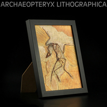 Vitae Archaeopteryx lithographica Fossil Photo Frame Dinosaur Toys Animal Collector Decoration Adults Gift