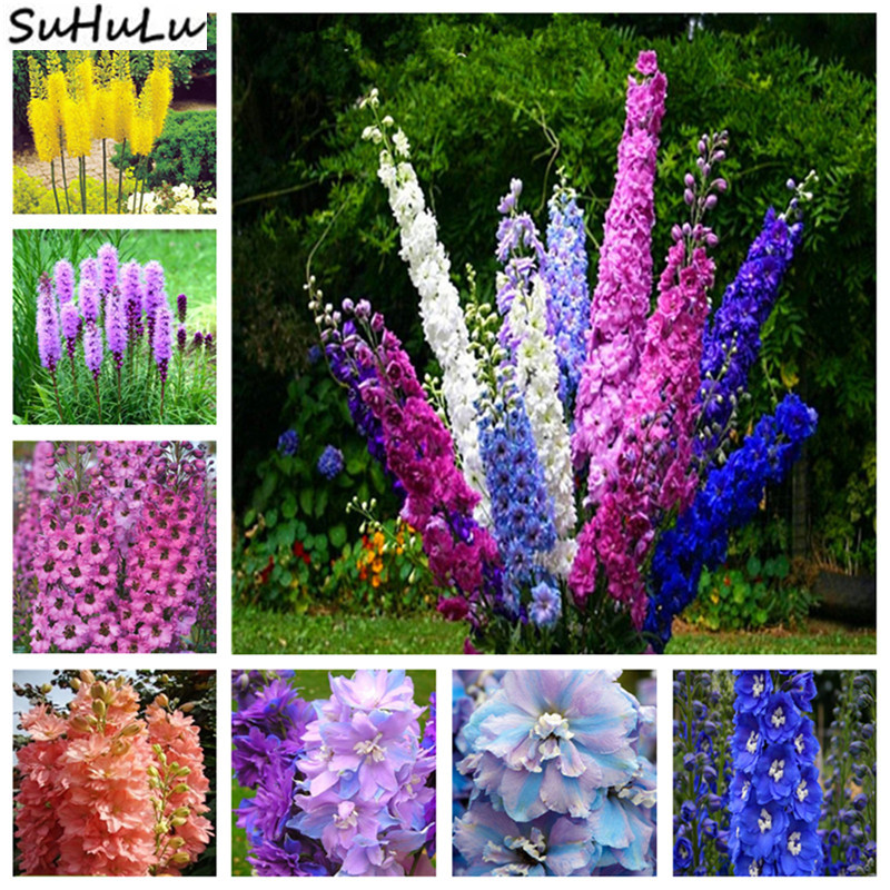 200 Pcs Giant Delphinium Flowers Colourful Rocket Larkspur Plants For Home Garden Decoration Bonsai Planting Gorgeous Cut Flower